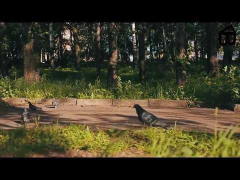 Дороги севера видео ролик смотреть на VideoSibnetRu