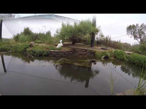 Living Coast Discovery Center SCEDC 2