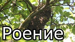Курсы пчеловода | Методы и способы воздействия на роение | Урок 3