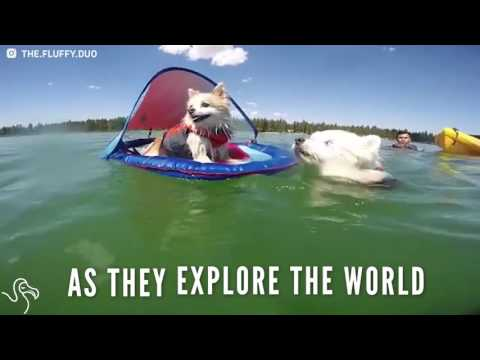 Blind Dog Goes Hiking And Swimming With Help From His Friend