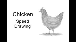 Chicken (Hen) Time-lapse / Speed Drawing