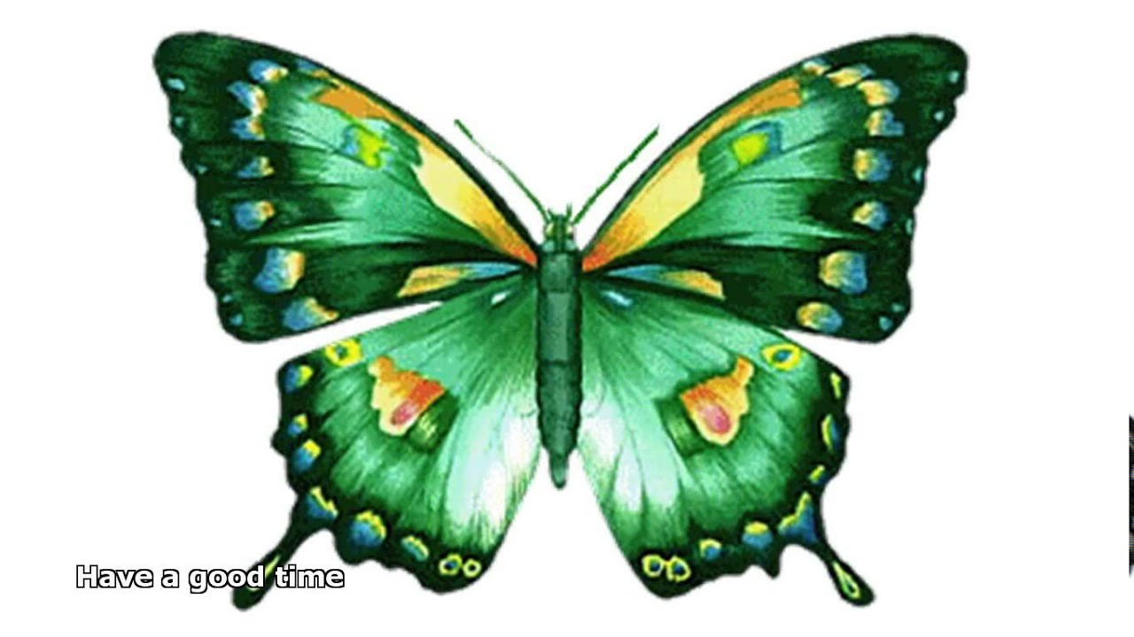 animated butterfly pictures youtube