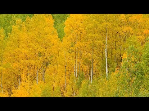 """Peaceful Music, Relaxing Music, Instrumental Music """"Aspen Autumn"""" by Tim Janis"""