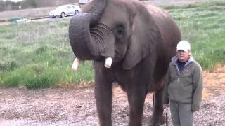Elephant bring us breakfast !!