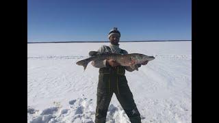 Щука монстр 11 5 кг Рыбалка на зейском водохранилище в марте 2020