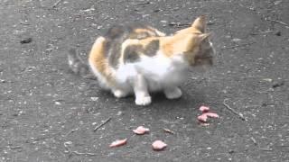 кот ест колбасу салями cat eats sausage salami