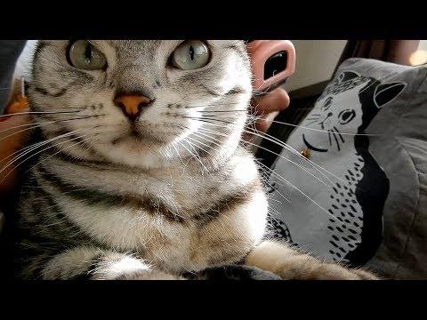 プロに任せてみた猫のブラッシング ~愕然…人によって全然態度が違う! -Professional Brushing for Cats