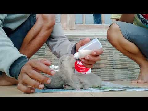 CARA MERAWAT OTTER 6 MENIT SEHARI || #VLOG_HEWAN_1.