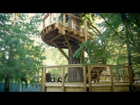 أخبار منوعة | #مايكروسوفت تبنى مكاتب جديدة لموظفيها على الأشجار  - 08:21-2017 / 10 / 15
