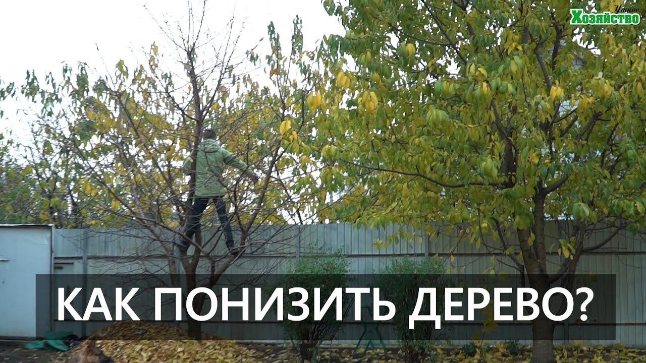 Как понизить дерево? Что делать если дерево слишком высокое?