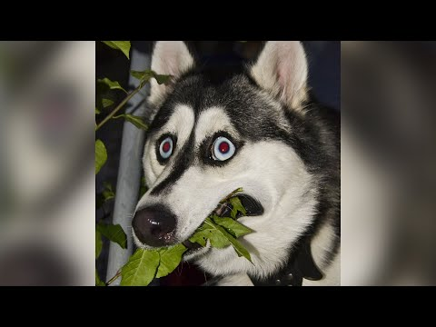Funny Cats  And Dogs  Videos - Animals From Tik Tok -  Try Not To Laugh Pets