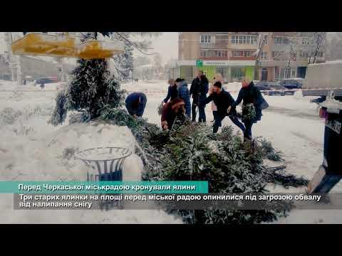 Телеканал АНТЕНА: Перед Черкаської міськрадою кронували ялини