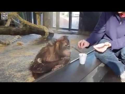 Affe sieht Zaubertrick