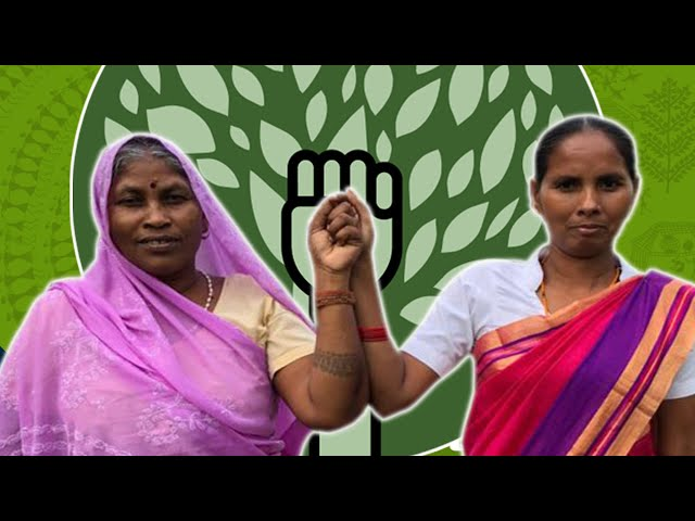Join CJP's fight to protect the rights of forest working people