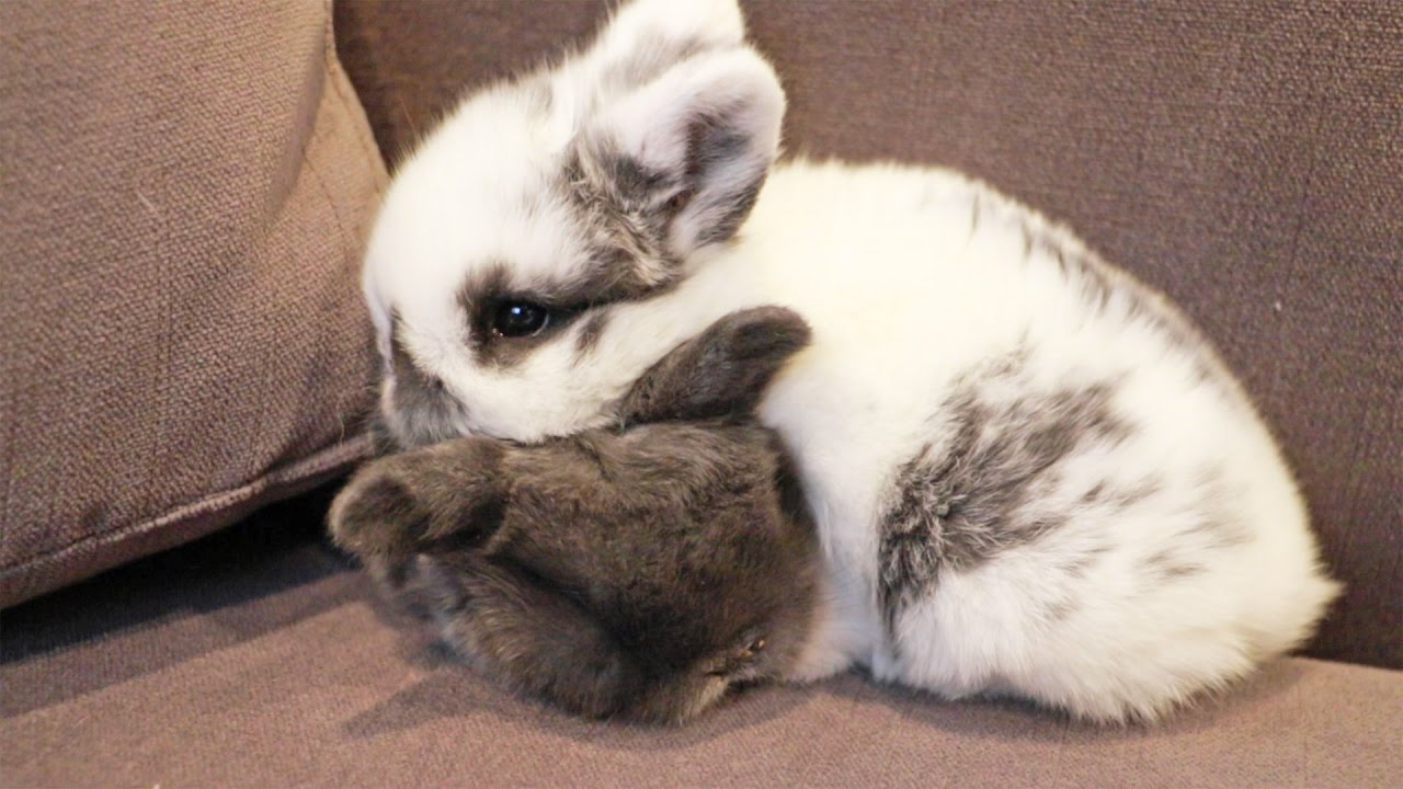The Cutest Baby Bunny Snuggle - YouTube 70ad64d5f