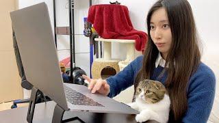 かまってちゃんな猫を放置して在宅勤務していたら一緒に仕事してくれましたw