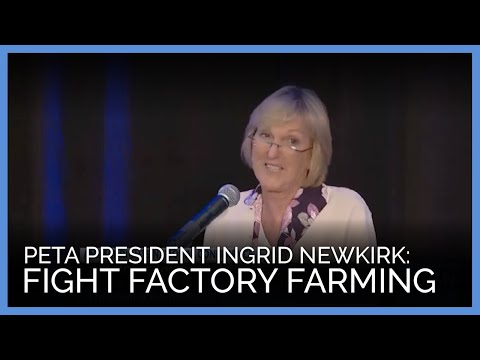 Hey, What if Fighting Factory Farming Were THE ONLY THING Anyone Worked to End?