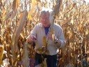 Roger & the Corn Stalk