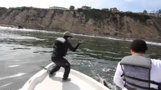 Radio Silence  & Face Down Bass Up - Palos Verdes, CA - Inshore CALICO BASS Fishing