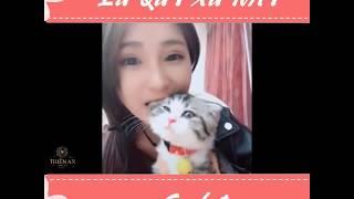 Đố Bạn Nhịn Được Cười Với Những Thú Cưng Hài Hước Nhất - Try Not To Laugh Funny Pets | Cute my pets