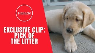 Pick Of The Litter Exclusive Clip