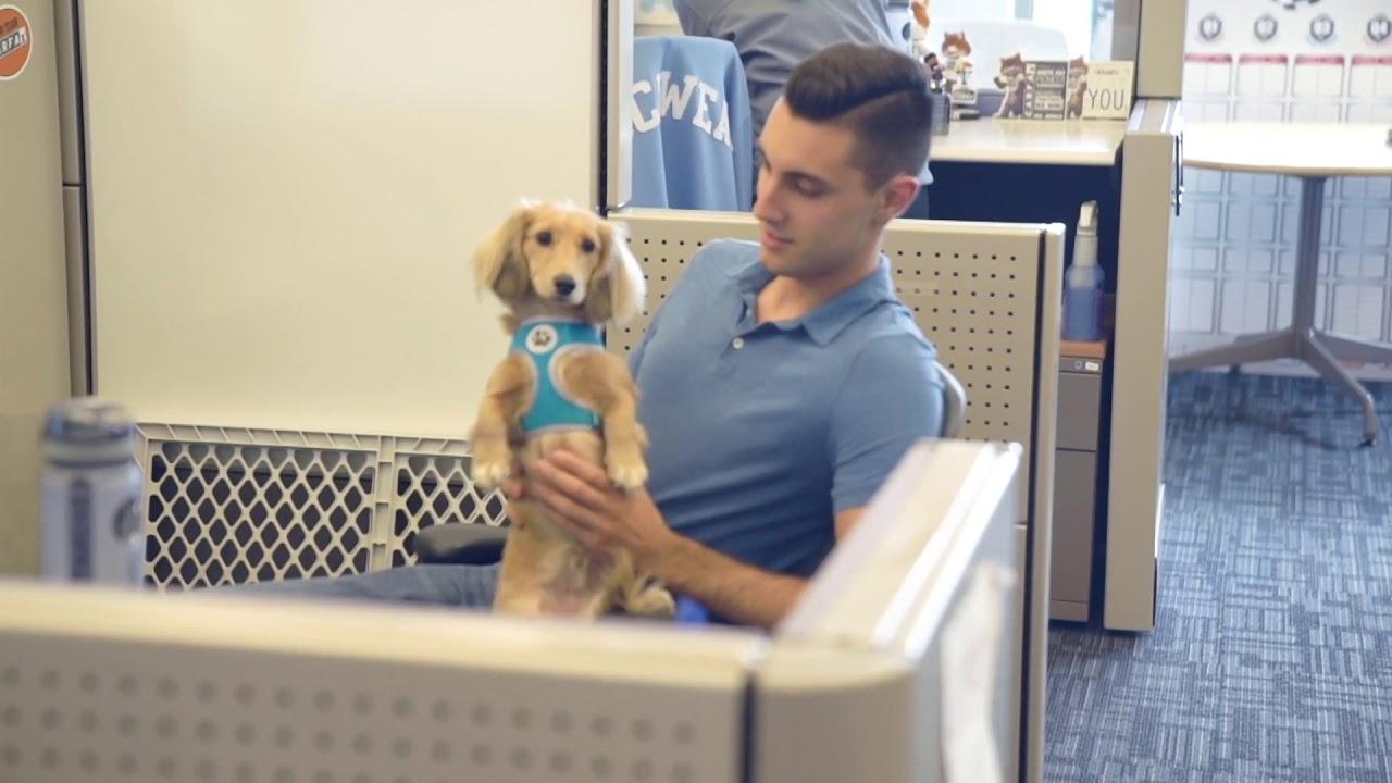 ძაღლები ოფისში - პროდუქტიული და სასიამოვნო გარემოსთვის