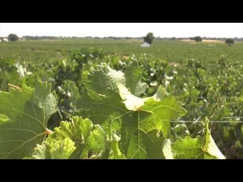 wine article The environment in La Mancha wines