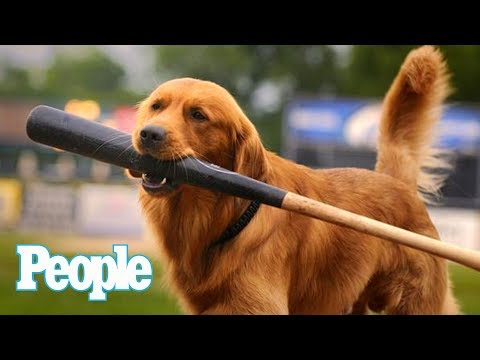Jake The Diamond Dog Is The Cutest Baseball Star You've Probably Never Heard Of   Pets   People