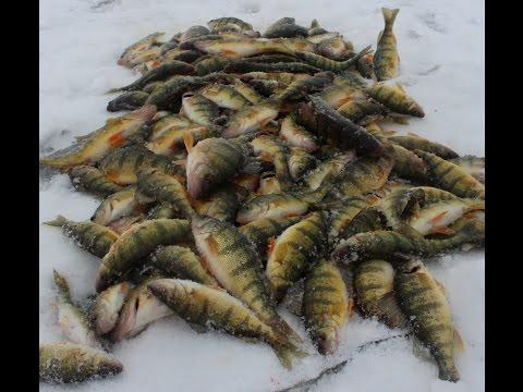 Ice Fishing Jumbo Perch LIMITS!!! Lake St. Clair
