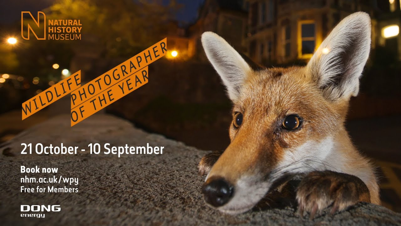 Wildlife Photographer Of The Year Natural History Museum - Amazing winners from the 2016 british wildlife photography contest