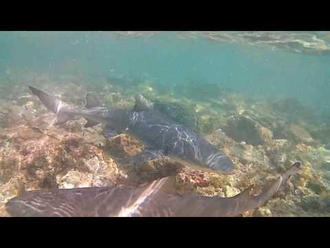CABO VERDE (ILHA DE SAL) - CABO VERDE (ISLA DE SAL) - CAPE VERDE (SAL ISLAND)