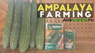 How to grow Ampalaya or Bittergourd   Agribusiness How It Works