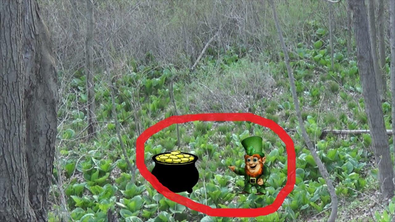 Leprechaun Camera Caught Real