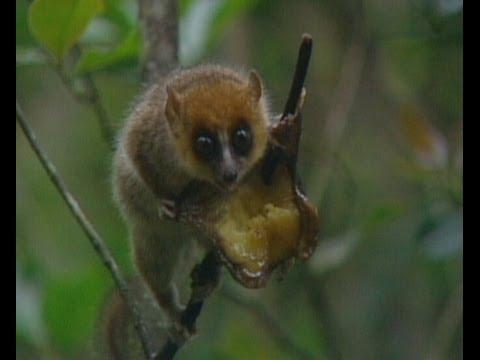 Part 9 Madagascar Island Ark - Before It's Too Late | Storyteller Media