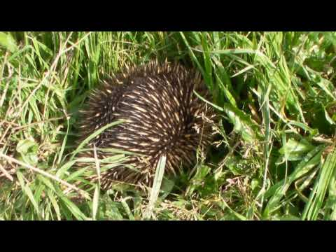 Murray River Expedition ~ Peter Dowling MP's Guide to the Echidna