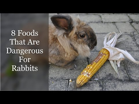 8 Foods That Are Dangerous For Rabbits
