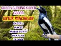Burung Kacer Macet Malas Bunyi Pancing Suara Kacer Gacor Pasti Nyaut  Mp3 - Mp4 Download