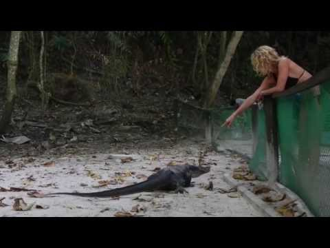 Monitor Lizard Gets Angry on Slovakia Girl!