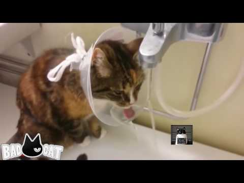 Adorable Cats Compilation - Best Funny Cat Videos Ever Part 1