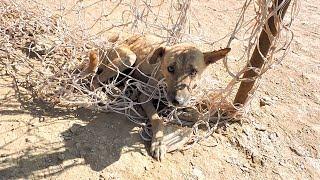 Animal Aid サッカーゴールのネットに絡まった犬を助けよう!