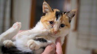 Kitten Amelia Is Sick