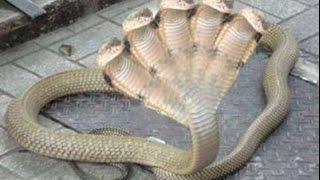 Топ 5 самых ядовитых змей в мире