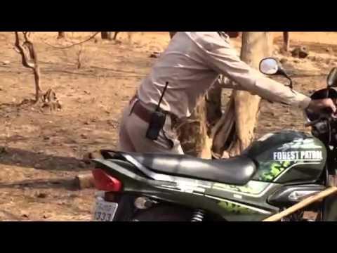 Sasan Gir Lion Safari
