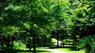 【自然音】夏の虫の音