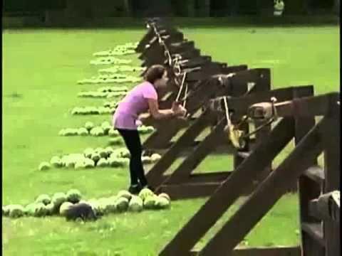 Tai nạn trong lúc chơi trò bắn dưa hấu