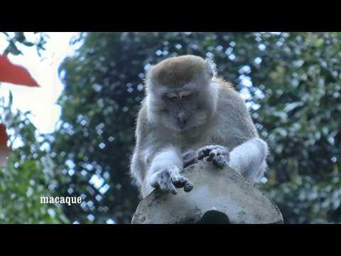 INDONESIA Eco Lodge, Bukit Lawang, Sumatra (hd-video)