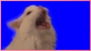Screaming Cat Blue Screen
