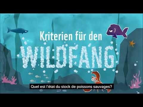 Les critères du guide WWF poissons et fruits de mer