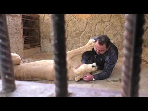 أسد..  أوفى صديق لسوري في مأوى للحيوانات  - نشر قبل 7 ساعة