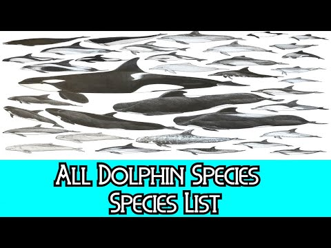 All Dolphin Species - Species List